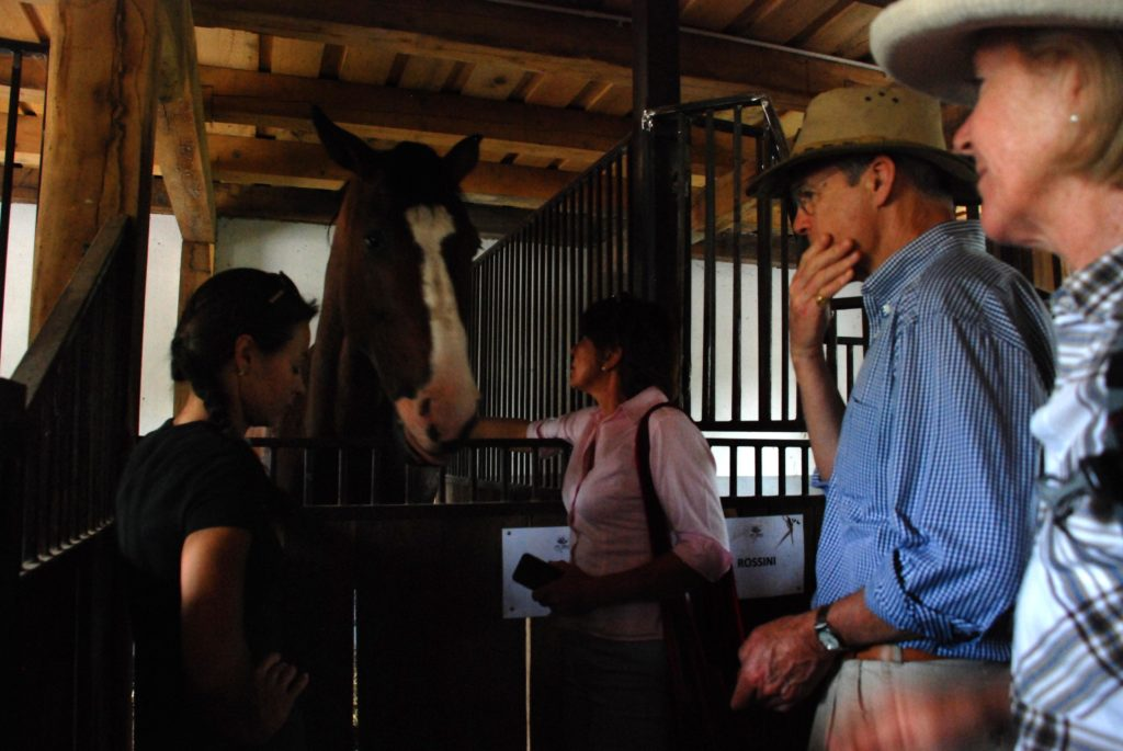 Horse_riding_tours_Stables
